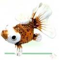 Сувенир «Золотая рыбка» (красная) (1 шт.)